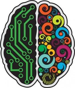 Cerveau droit et gauche